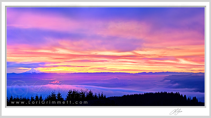 Above the Fog – Panoramic